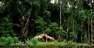 Hutan Tropis Papua – 7 Fakta Unik Indonesia yang Mendunia