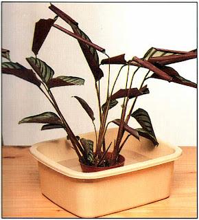 Чтобы оживить растение, потребуется несколько часов.