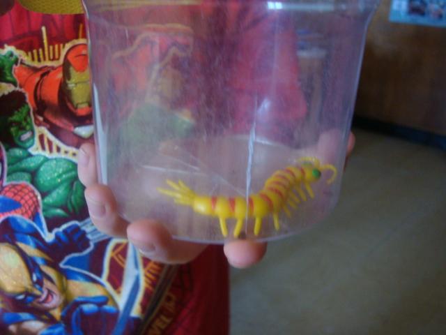 how to catch a centipede