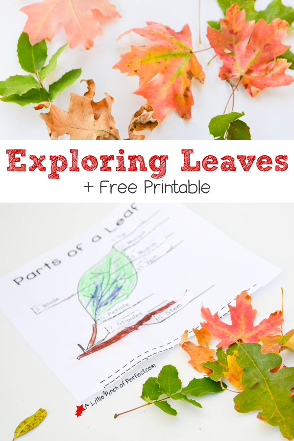Exploring Leaves with Free Printable!