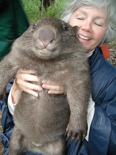 som bbw Wombat