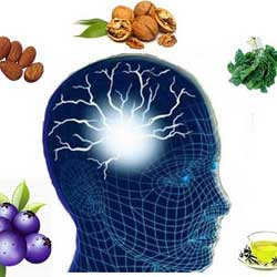 Foods to Improve Memory