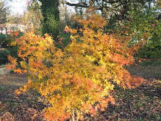 couleurs automne