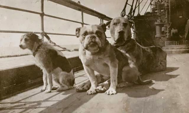 perros titanic malamarshop
