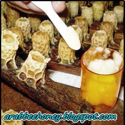 غذاء ملكات النحل يقي من الإصابة بسرطان القولون