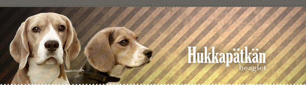 Hukkapätkän beaglet