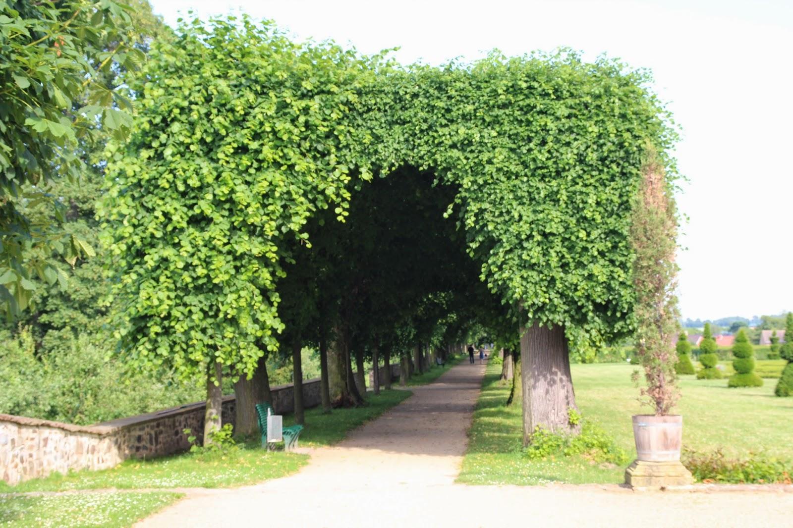 alejka drzewa