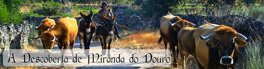 À Descoberta de Miranda do Douro
