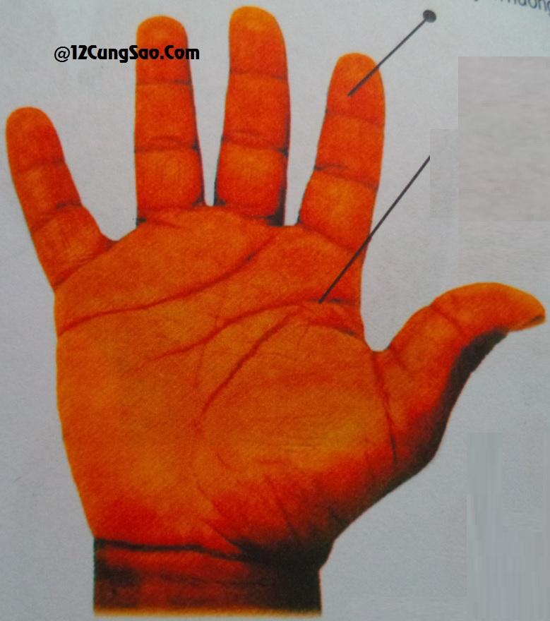 Bàn tay hình thổ & xem tướng số của bàn tay này!