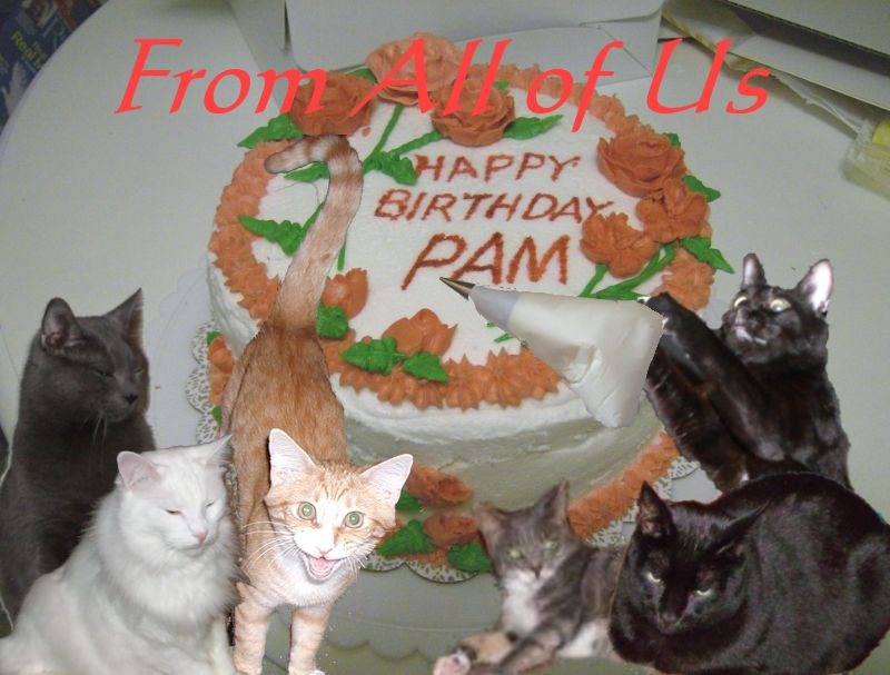 Tomcat Commentary by Tim No Fishes Pam These are Birthday Wishes