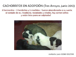 adoptados!