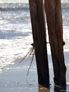 jetty legs
