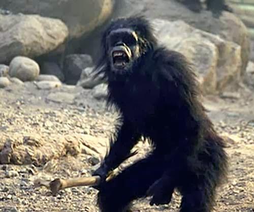 The Human-Ape Hybrid
