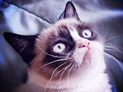 number three: Grumpy Cat. If you don't know this cutie, who are you!