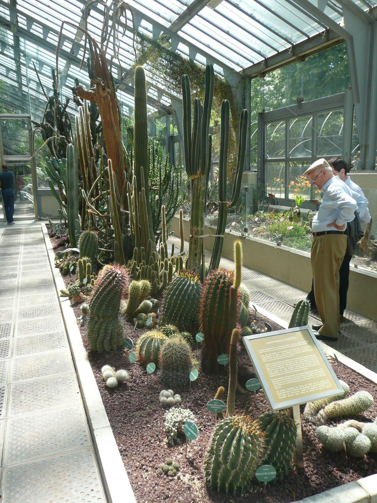 C ctus y plantas de mar a invernadero del real jard n for Jardin cactus madrid