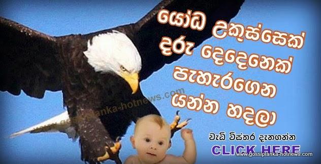 http://www.gossiplanka-hotnews.com/2014/08/eagle-try-to-pick-up-2-babies.htm