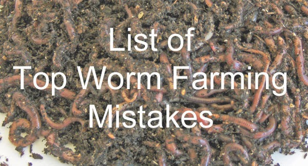 List of top worm farming mistakes and problems