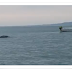 Monstruo marino enorme filmada en Irlanda Loch 2013
