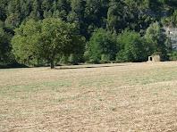 El gran camp de la Plana del Campaner amb una grossa noguera i una barraca de pagès