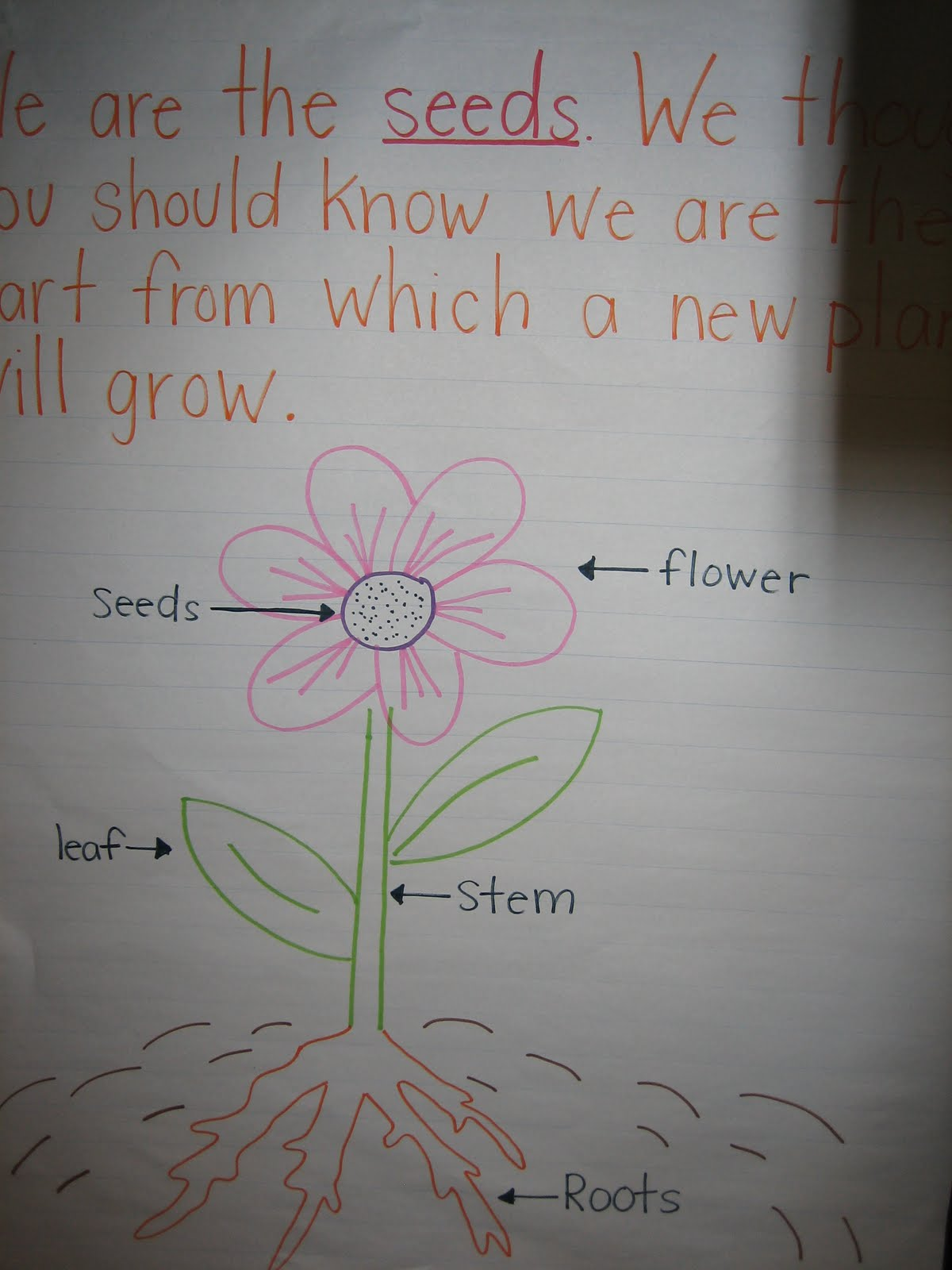Buggy for Second Grade Plant Life Cycle