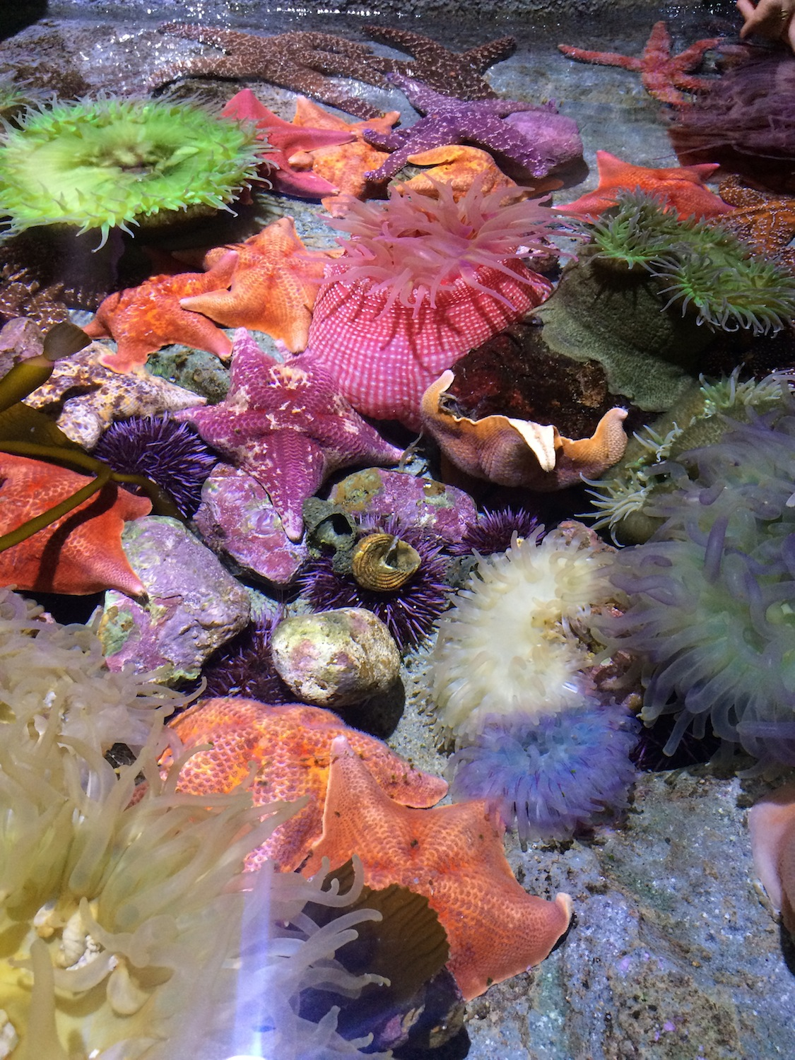 Getting A Close Up Look At Colorful Sea Anemones And Textured Cs You Can Even Touch Feel This Gorgeous Marine Life