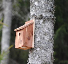 FÅGELHOLKARNA LOCKAR MASSOR MED SMÅFÅGLAR
