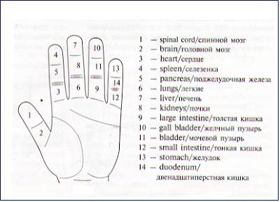 С каким органом связан средний палец