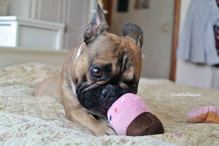 Hundegeburtstagsgeschenke