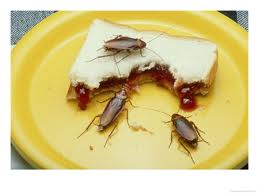 Cockroaches on the plate eating Jelly sandwitch