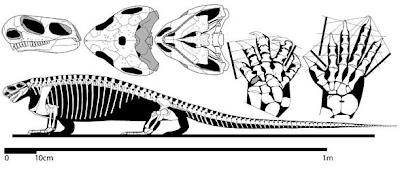 Casea skeleton