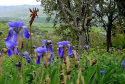 Blog CAU del'ArT Pirineus