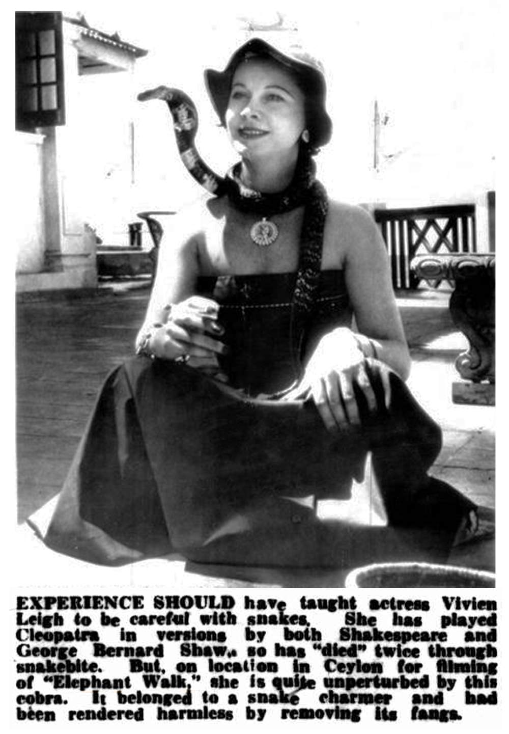 Vivien+Leigh+Cobra.jpg