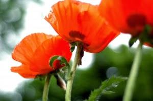 Tips for a Beautiful Spring Garden