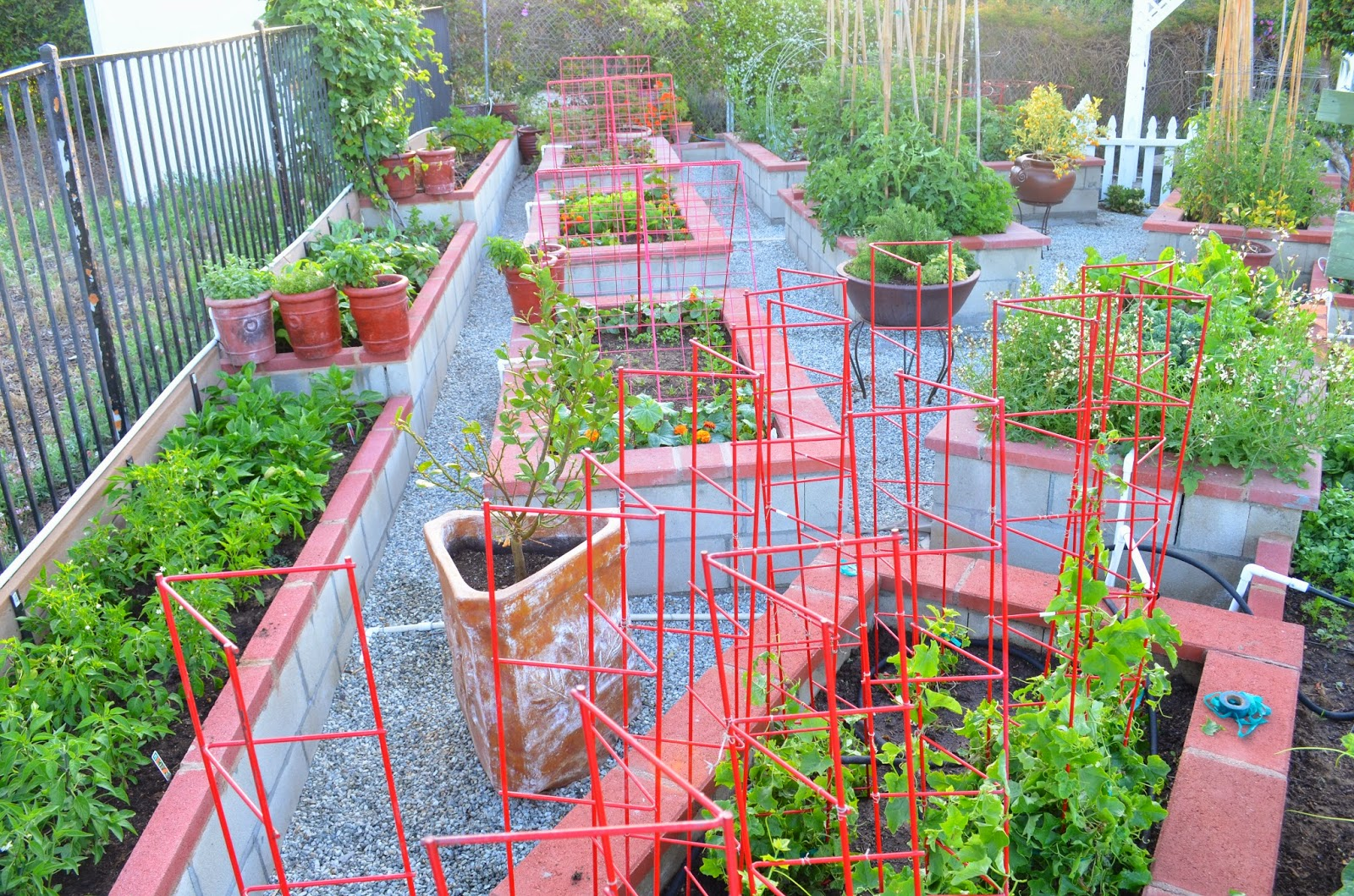 Plants For Kitchen Garden Entertaining From An Ethnic Indian Kitchen Garden Tour 2 The