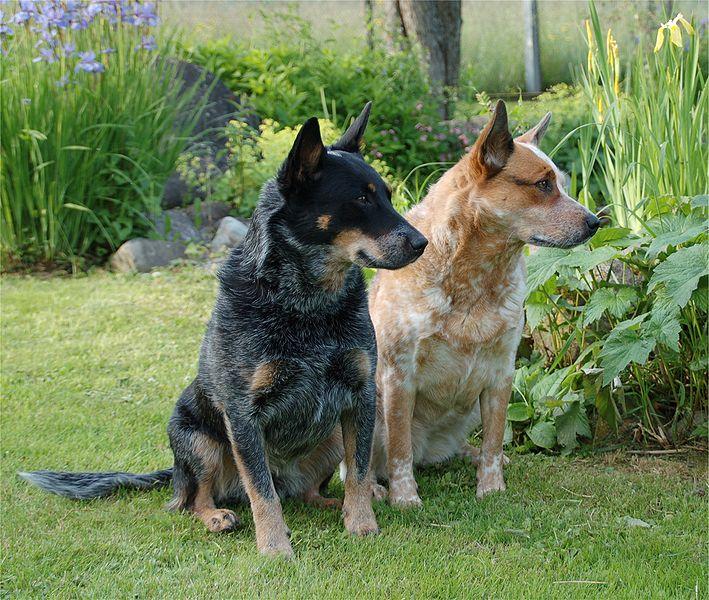 cerca jardim cachorro : cerca jardim cachorro:CachorrosBlogs.: Hortas e Jardins – Cachorros.