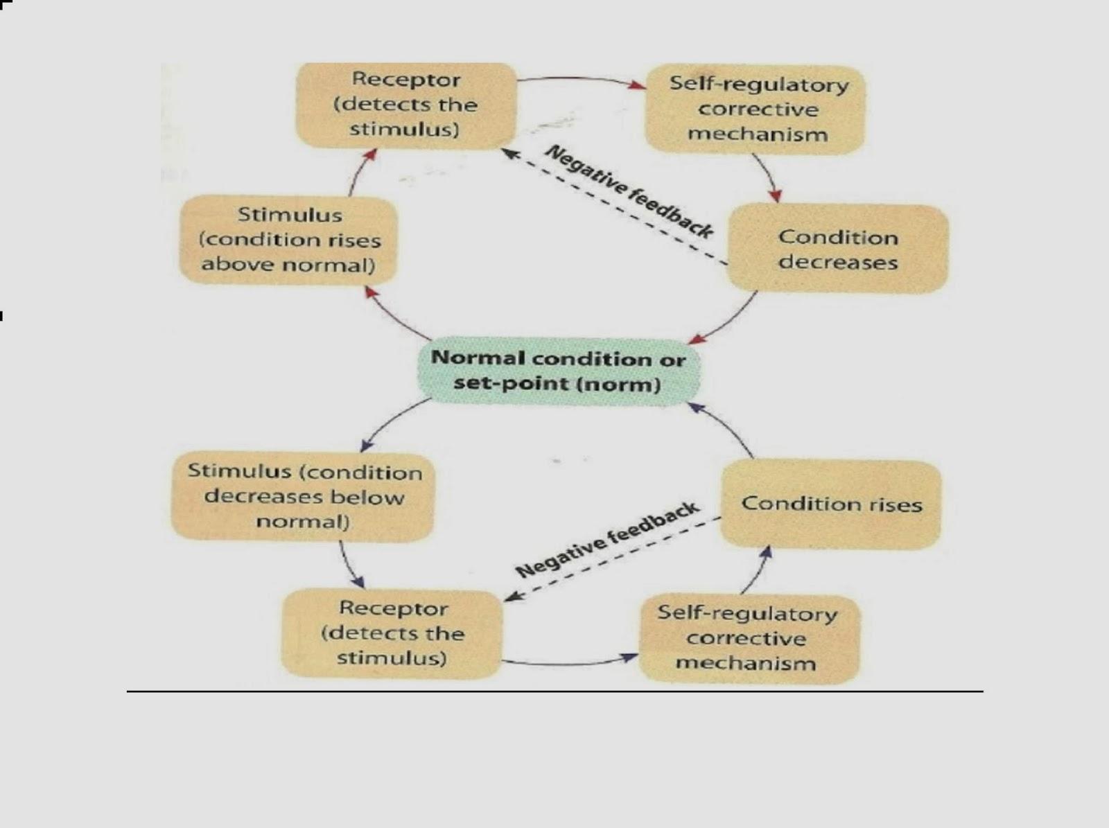 fqah0113: principle of homeostasis