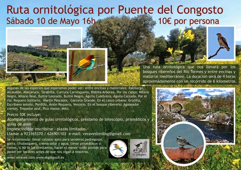10/mayo. Ruta Ornitológica. Puente Congosto