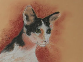 Oriental Shorthair Cat Art By Cori Solomon
