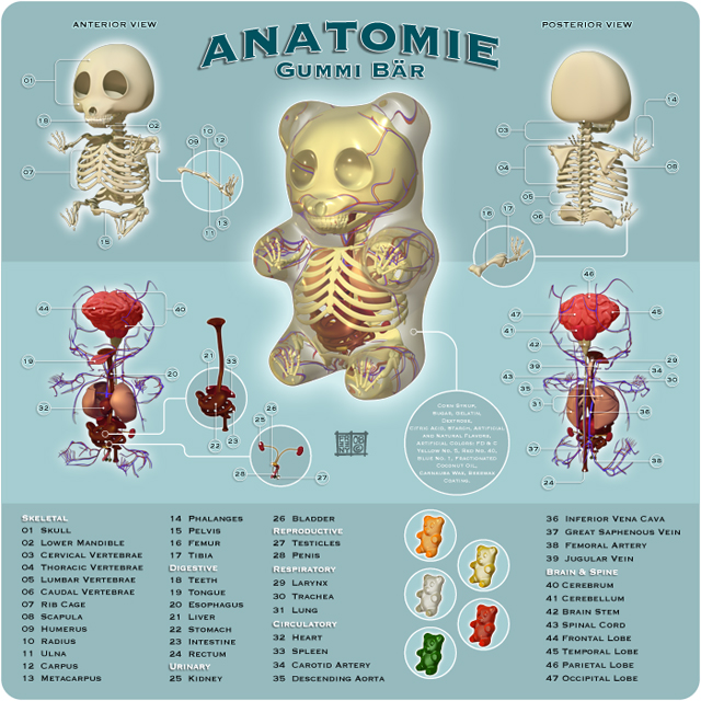 EVIL BEARDS: Anatomía de un Pandita