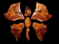 """""""Butterfly""""  FF261"""