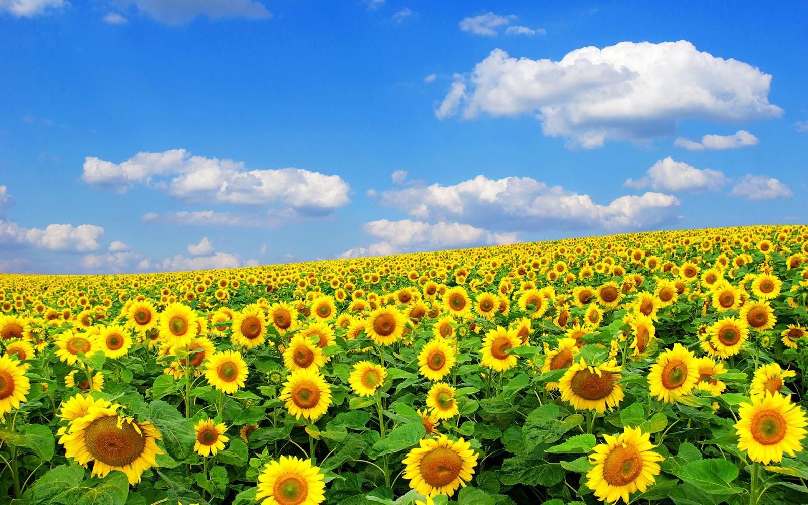 las verdaderas paginas amarillas: