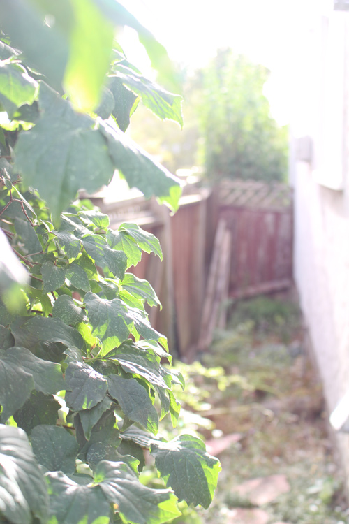 backyard vines, photo diary of vancouver fashion blogger jasmine zhu