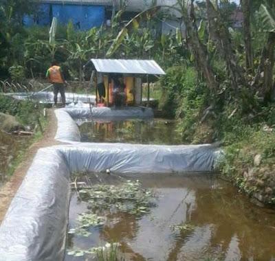 Cara dan Teknis Membuat Kolam Tanah Budidaya Ikan Nila