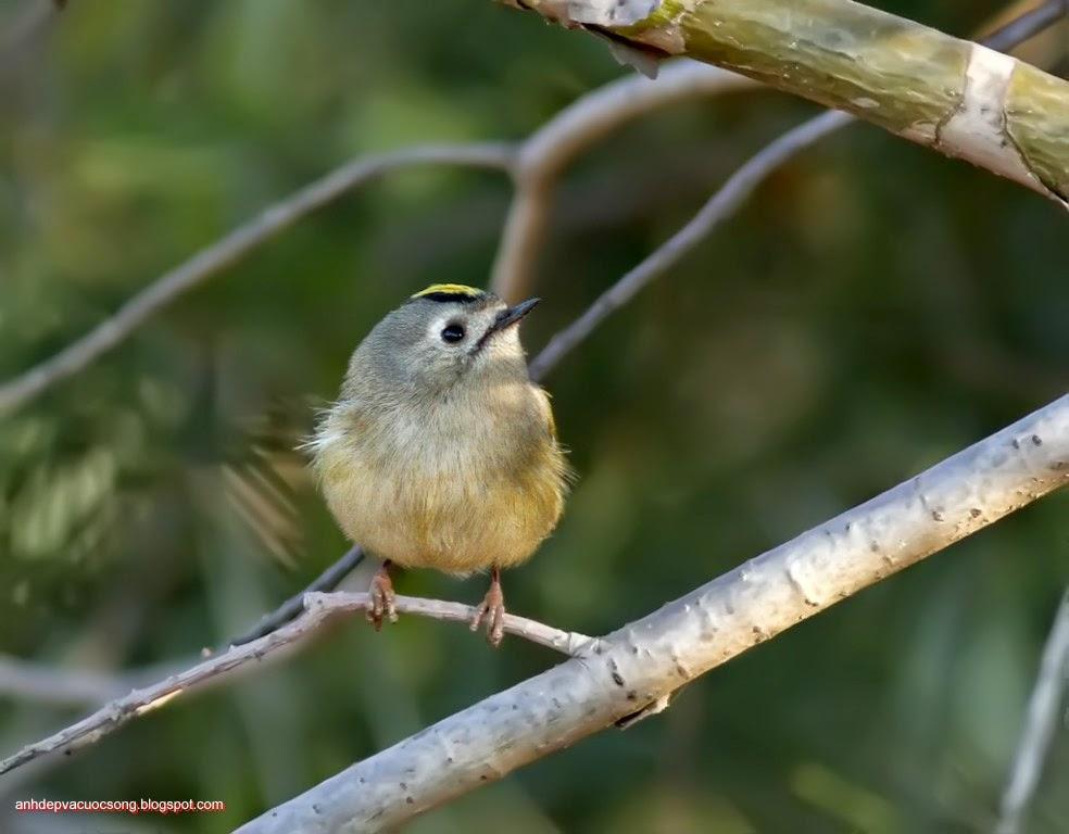 Ảnh thiên nhiên: Chú chim nhỏ 3