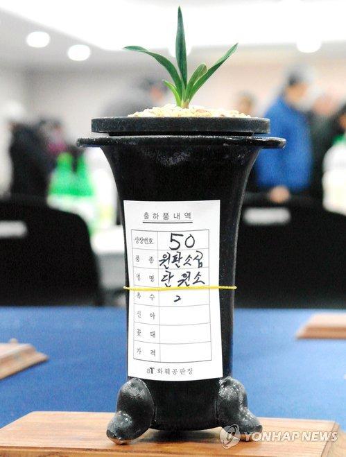 Orquídea coreana subastada por una cifra delirante
