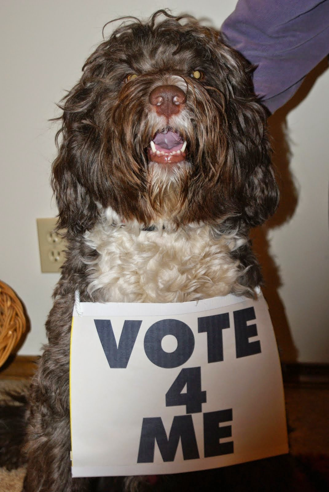 Vote For Fudge