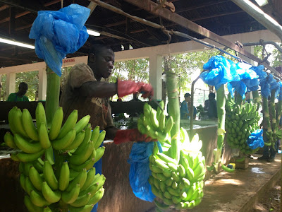 Essay on visit to trade fair