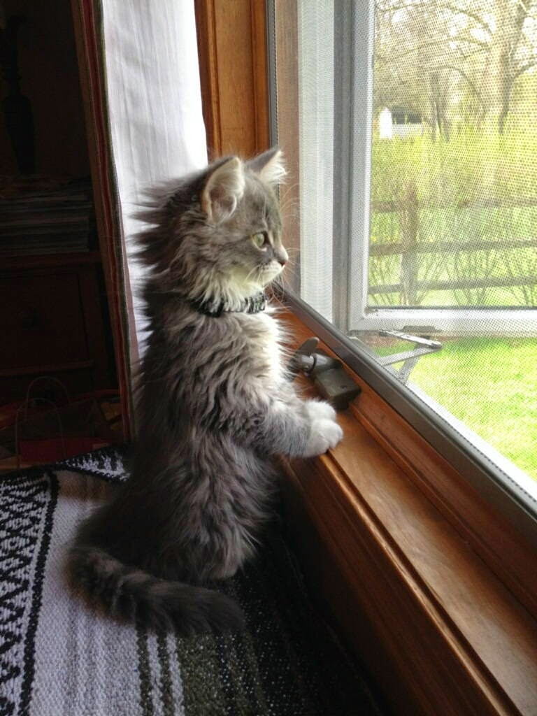 Funny cats - part 103 (40 pics + 10 gifs), cat photos, funny cat pictures, cute cat