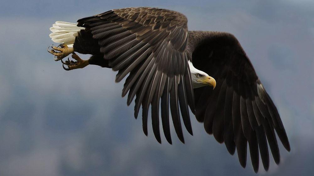 En Güzel Kuş Resimleri