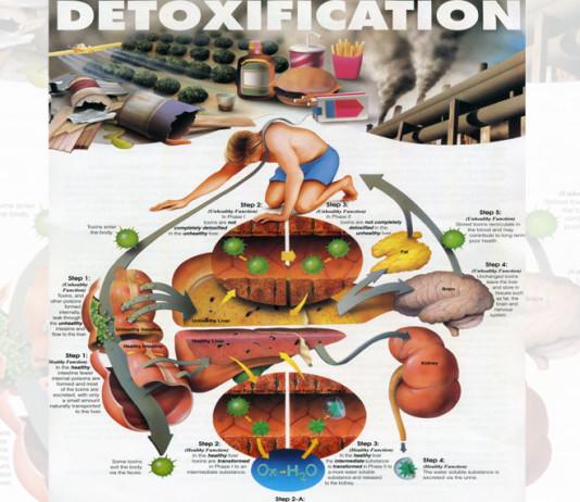 Proses Detox (detoksifiksi) Miom